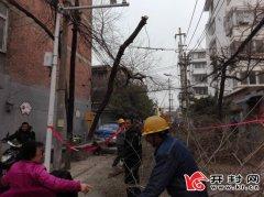 宏学街一棵枯树树枝压线缆办事处社区积极协调 修剪枯枝消除安全隐患
