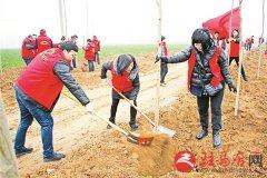 西园街道志愿者义务植树忙