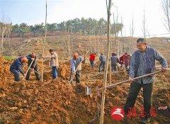 泌阳县掀起林业生产高潮