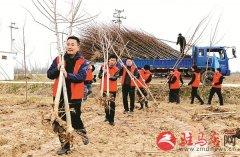 """诸市镇志愿者义务植树为创森增""""绿""""添彩"""
