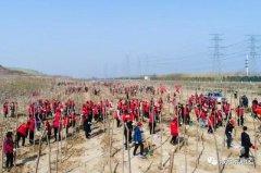 """2000余棵树苗在龙山""""安家落户"""" 示范区干部职工以实际行动践行""""绿水青山就是金山银山""""新理念"""