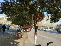 """4辆共享单车""""骑""""上行道树 谁搞的恶作剧?"""