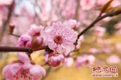郑州市第五届桃花文化节今日在动物园开幕