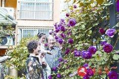锦绣公馆小区有个百花园