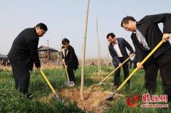 我县开展春季集中义务植树活动