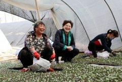 县长张颖波调研蔬菜生产发展情况