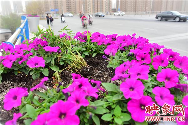 """街头的鲜花被偷走不少,留下刺眼的""""伤疤"""""""