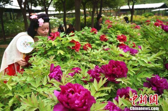 游客近距离观赏牡丹花。 韩章云 摄