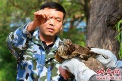 二级保护动物雀鹰遭流浪猫围攻 好心市民及时搭救