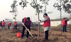 县审计局积极开展义务植树活动