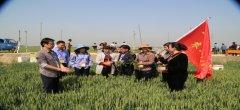 鄢陵县农业技术团指导农民开展小麦病虫害防控