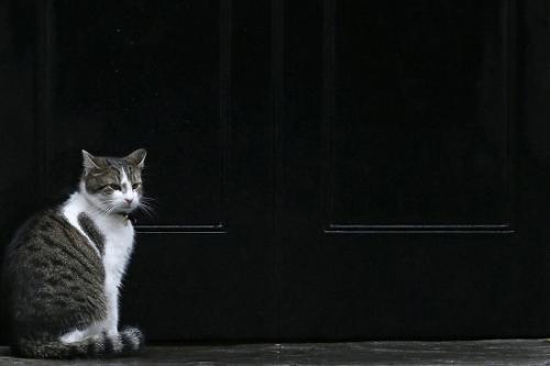 """据介绍,哈蒙德家养的两只宠物狗一只是威尔士梗""""雷克斯"""",一只是腊肠犬""""奥斯卡"""",它们一住进首相府,和""""拉里""""的关系就不太融洽。报道称,哈蒙德对朋友称,因为唐宁街10号的一楼是""""拉里""""的地盘,他不得不把""""雷克斯""""和""""奥斯卡""""关在楼上的房间里。"""