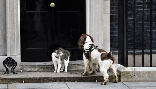 """报道还引述英国前财政大臣奥斯本的友人的话称,奥斯本2013年搬进唐宁街10号的时候,也是让自家爱犬""""罗拉""""离""""拉里""""远远的。"""