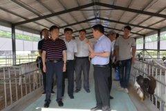 县长马同和调研产业扶贫项目建设情况