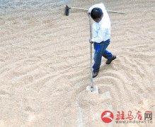 体验收割小麦的苦与乐