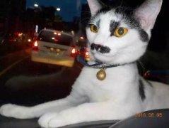 这猫耗尽毕生精力 就是为了来搞笑的吧