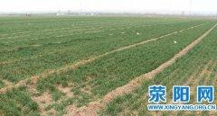 天气回暖  我市46.8万亩小麦长势良好