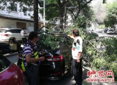 大神棋牌街头树枝断裂砸坏轿车 绿化部门:湿树枝断裂属于不可预见的自然灾害