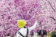 近期医院花粉过敏患者增多 医生提醒:赏花后要及时洗手洗脸