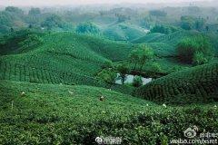 """茶旅融合发展——信阳版""""诗和远方""""方案发布!"""
