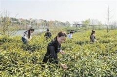 信阳:南湾湖风景区旅游体验活动丰富多彩