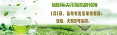 茶旅一体化 信阳市政府公布实施茶旅融合发展工作方案