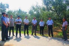 平顶山市鲁山县人大考察团到我县考察学习酥梨产业生产经验