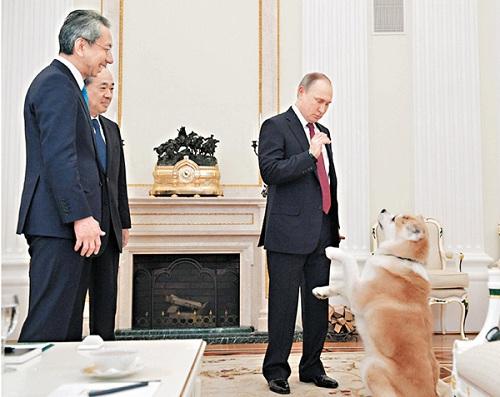 """普京带着秋田犬""""梦""""与日本记者见面。"""