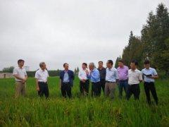 """尚朝阳来我县调研""""三秋""""生产和农业产业结构调整工作"""