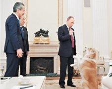 普京带秋田犬见日本记者 狗不停吠场面一度混乱