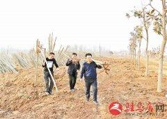 驿城区 全面推进森林生态体系林业经济体系建设