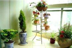 阳台可摆放哪些植物?