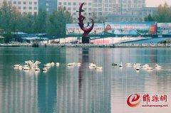 睢县北湖 天鹅驿站