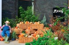 北平花园天安门店,四季主题活动――邂逅北平的十二道秋味