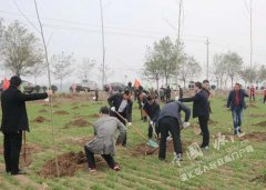 区四大班子领导与干部群众一起义务植树