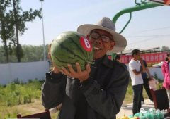 称重、比甜、吃西瓜比赛这个村的首届西瓜节精彩多多!