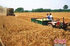 河南的哥横跨千里回乡收麦:有田有粮外出不慌