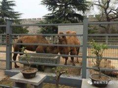 汴京公园动物园全新亮相半年多大规模改造 形成独特生态景观