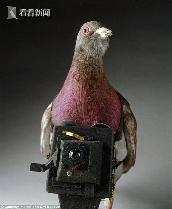 """英国《每日邮报》1月2日披露了过去几十年里曾经""""叱咤风云""""的几件间谍使用的工具和武器,这些当年最常用的间谍工具和武器,目前都存放在位于华盛顿的国际间谍博物馆里。图为鸽子摄影师:按照今天的标准,这个照相机显得过于笨重,但在第一次世界大战期间,这种鸽子摄影师会偷偷飞到敌方阵地上偷拍。_article_url', 'Content':'', 'Attributes':[], 'Children':["""