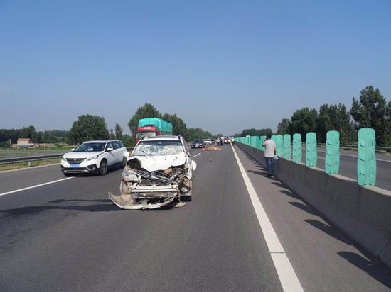 一头牛闯入高速公路 被疾驰车辆当场撞死
