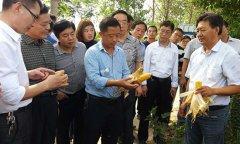 河南省2017年玉米籽粒联合收获机械化技术现场观摩会在我县举行