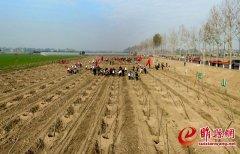我县组织开展冬季全民义务植树活动