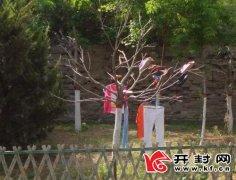 滨河路环城公园绿化树成了晾衣架专家:树上晾衣有害身体、伤害树木、有损市容