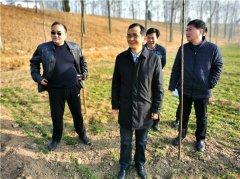 县长孙庆伟专题调研今冬明春造林绿化工作