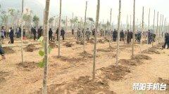 市四大班子领导参加冬季全民义务植树活动