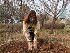 春风和煦绿化忙――龙岗街道办事处全面开展春季植绿护绿活动