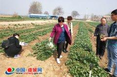 虞城绿色蔬菜生产基地接受市级检查指导工作