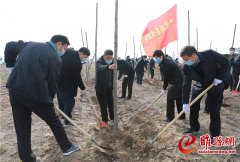 我县组织开展全民义务植树活动
