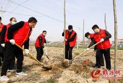 """【新时代文明实践在睢县】""""志愿红""""用绿色装点春天"""