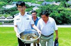 豫籍的哥拒绝万元诱惑 在舟山救了条特大娃娃鱼